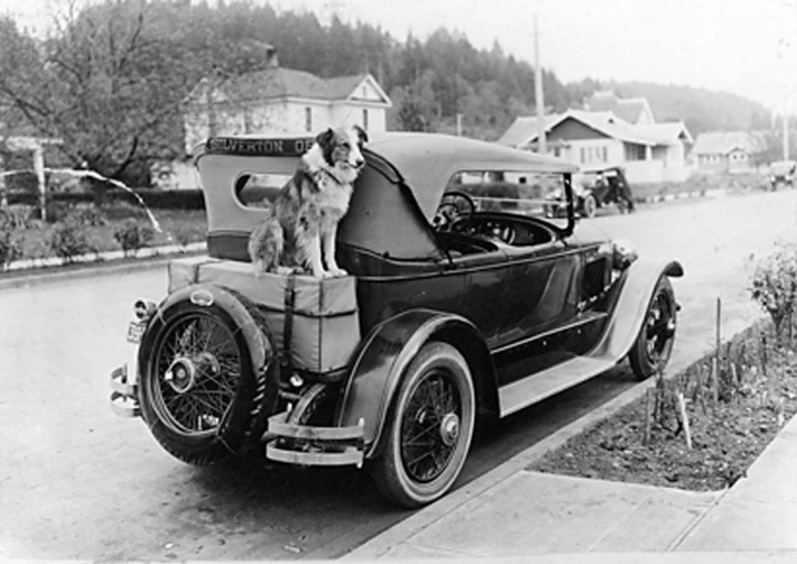 Bobbie the Wonder Dog liked to ride on the outside