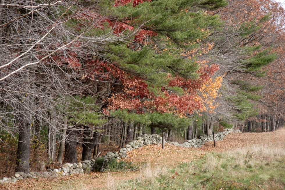 The actual mending wall according to one website on Robert Frost's farm
