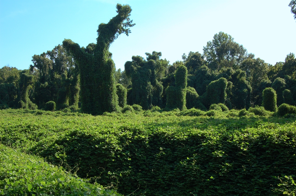 When Kudzu runs wild - those are trees it's covering