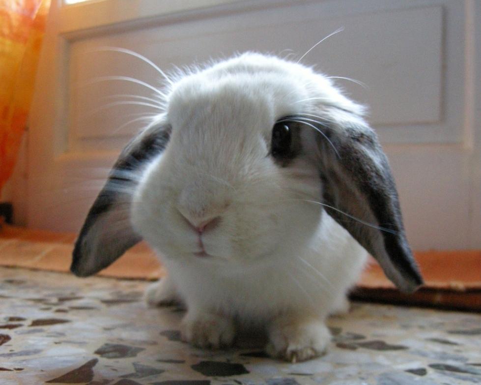 Is Jesus really like a fluffy bunny?