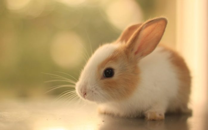01 bunny